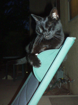 mishka on a chair